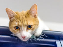 Healthy young cat in funny posture Royalty Free Stock Photography