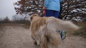 Healthy young woman with dog running on rural track stock footage