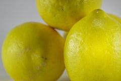 Healty organisches natürliches Gelb der frischen Frucht der Zitrone Stockbilder
