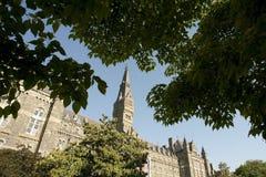 Healy Hall через деревья Стоковые Изображения