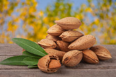 Heap of almonds in their skins and peeled with leaf  on white background Stock Image