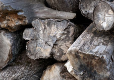 Heap of ancient logs Stock Images