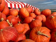 Heap of Autumn Carving Pumpkins for Sale. At local farmers market Stock Photos