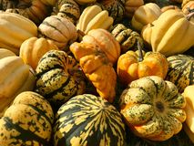 Heap of Autumn Carving Pumpkins for Sale. At local farmers market Stock Image