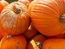 Heap of Autumn Carving Pumpkins for Sale. At local farmers market Stock Photography
