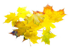 Heap of autumn leaves isolated on white Royalty Free Stock Photo