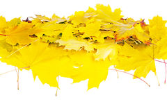Heap of autumn leaves isolated on white Royalty Free Stock Images