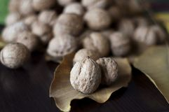 A heap of walnuts on a leaf. A heap of autumn walnuts on a leaf Stock Photography