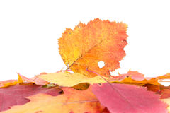 Heap of autumnal leaves Stock Image