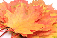 Heap of autumnal maple leaves Royalty Free Stock Photos
