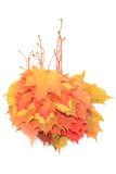 Heap of autumnal maple leaves on white background Royalty Free Stock Image