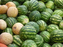 A heap of big green and yellow watermelons Royalty Free Stock Image