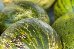 Heap of Big Ripe Organic Green and Yellow Striped Melons at Farmers Market. Vibrant Colors. Summer Harvest. Vitamins Superfoods Stock Photos