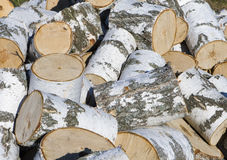 Heap of birch firewood Stock Image