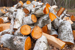 Heap of birch firewoods Royalty Free Stock Image