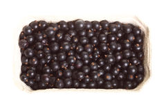Heap of black currant isolated box background Royalty Free Stock Photography