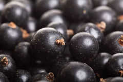 Heap of black currant. Textured background Royalty Free Stock Image