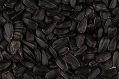 Heap of black sunflower seeds Royalty Free Stock Photos
