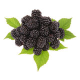 A heap of blackberries. On leafs, just waiting for some cream Royalty Free Stock Photos