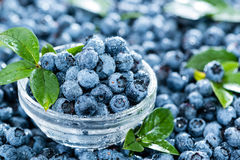 Heap of Blueberries Stock Photos