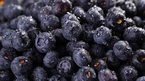 Heap of blueberries. Heap of fresh blueberries under the rain. Timelapse Closeup macro shot. Fresh berry series stock footage