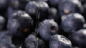Heap of blueberries. Heap of fresh blueberries under the rain rotating. Closeup macro shot. Fresh berry series stock video footage