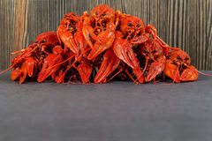 Heap of boiled crayfish Stock Images