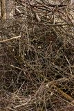 Heap of branches Royalty Free Stock Photo