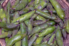 A heap of broad beans in an artisan basket royalty free stock images