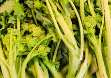 Heap of Broccolini Royalty Free Stock Photos