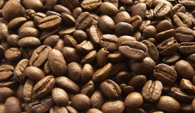 Heap of brown coffee seed. Heap of broun coffee seed like a background royalty free stock photo
