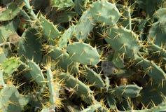 Heap of cactus Stock Photo