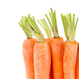 Heap of carrots Stock Image