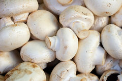 Heap of champignons Royalty Free Stock Images