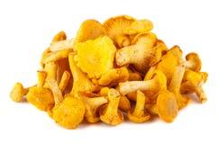 Heap of chanterelle mushrooms Royalty Free Stock Photos