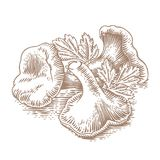 Heap of chanterelles with parsley Royalty Free Stock Photos