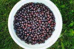 Heap of cherries in white bowl on grass, top flat view Stock Photography