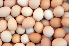 Heap of chicken eggs Stock Images