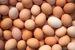 Heap of chicken eggs. Big pile of randomly stacked raw chicken eggs stock photos