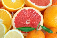 Heap of citrus Stock Photos