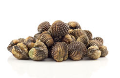 Heap of cockles on white background. Heap of fresh cockles - seafood on white background Stock Images