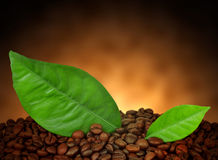 Heap of coffee beans Royalty Free Stock Images