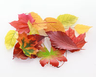 Heap of colorful faded autumn leaves Stock Photo
