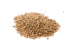 Heap of coriander seeds Royalty Free Stock Photo