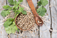Heap of Coriander (seeds) Stock Image