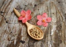 Heap coriander seeds Royalty Free Stock Photo