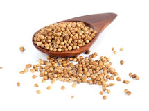 Heap coriander seeds in wooden spoon Royalty Free Stock Photos