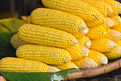 Heap of Corn Stock Image