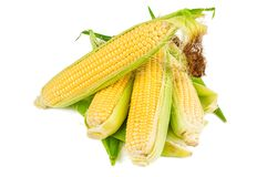 Heap of corn cobs. Isolated on white Stock Photography