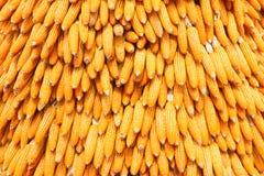 Heap of corn Stock Image